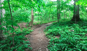 Chapel Hill Hiking Trails
